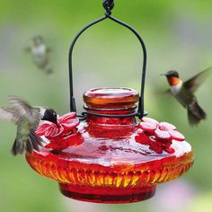 Hummingbird Feeders available in many styles. Choose from bottle style, top fill and glass hummingbird feeders.