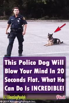 Police dogs, Cop dog, Dogs, Kittens and puppies, Police Working dogs - This police dog does something in just 20 seconds that is sure to shock you police cop dog policedog training - Funny Animal Memes, Funny Dogs, Funny Animals, Cute Animals, Kittens And Puppies, Cats And Kittens, Cop Dog, Smelly Dog, The Lion Sleeps Tonight