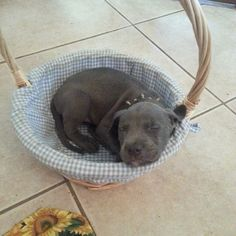 Pit baby in a basket.