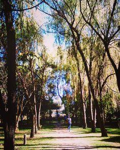 #bogotá #jardinbotanico #tres #photography #bosque #leginik #forest #green #land