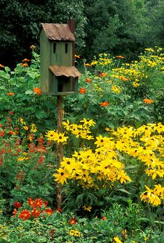 Rustic birdhouse livens up blooming summer garden of orange and yellow flowers