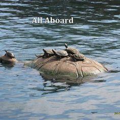 Turtles!!! Cute cute turtles!!!!