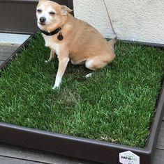 Grass, Corgi, Animals, Animais, Corgis, Animales, Animaux, Grasses, Animal