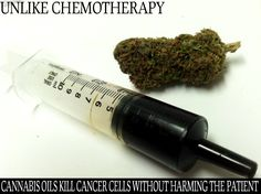 It's time to give people the opportunity to choose their course of medicine. There is abundant scientific evidence that suggests that cannabis cures cancer. #Legalize and give cancer patience a Fighting Chance!  http://phoenixtears.ca/video-library/