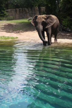 can't.wait.to.see.elephants!!!!