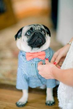 Hipster | 12 Best Dressed Pets At Weddings