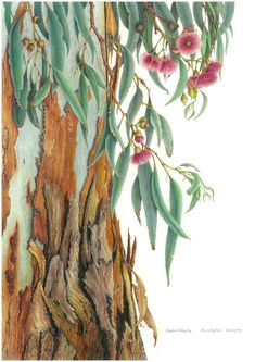 The Art of Botanical Illustration 2012 Sandra Johnston Australian Wildflowers, Australian Native Flowers, Botanical Drawings, Botanical Art, Australian Painting, Pastel Art, Tree Art, Watercolor Flowers, Painting Inspiration
