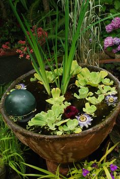 GardenBook: Visiting Little and Lewis. Water feature