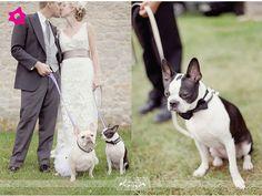 Esta pareja está acompañada de un BullDog Francés ¡Que lindo!