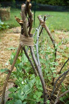 How to: Build a Pea Teepee. Build a Plant Teepee with sticks for those vines to grow on.too lovely. It's so English garden. Pea Trellis, Garden Trellis, Garden Plants, House Plants, Fruit Garden, My Secret Garden, Garden Structures, Edible Garden, Garden Spaces