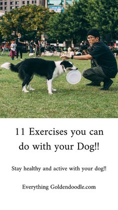 Stay healthy and active with your dog! New Puppy, Puppy Love, Goldendoodle Training, Hiking Spots, Dog Park, Training Your Dog, Burn Calories, Dog Owners, Pet Toys