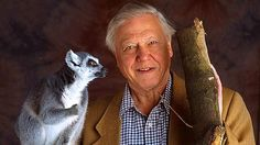 Image for The Life of Mammals with Attenburgh, BBC