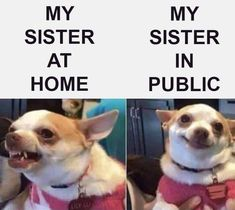 funny memes for boyfriend . funny memes for women . funny memes about work . Funny Animal Jokes, 9gag Funny, Crazy Funny Memes, Really Funny Memes, Funny Laugh, Stupid Funny Memes, Funny Relatable Memes, Haha Funny, Funny Dogs