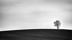 https://flic.kr/p/tBxjQA   Alone.........   Plain and simple lonely tree landscape. Sony A7II/70-200mm.  Press L for a larger view :-)