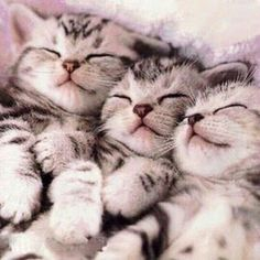 Bundle of preciousness.  ねむねむ…  #kittens