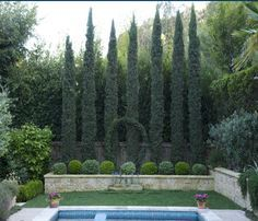garden olive trees boxwood roses lavender cypress - Google Search