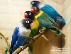 Windy City Parrot helps you find the right nutrition for your specific species. African Lovebirds, Majestic Horse, Bird Food, Colorful Birds, Love Birds, Beautiful Children, Animal Kingdom, Pet Birds, Parrot