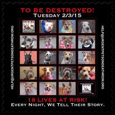 TO BE DESTROYED:18 beautiful dogs to be euthanized by NYC ACC- TUES. 02/03/15. This is a VERY HIGH KILL shelter group. YOU may be the only hope for these pups! ****PLEASE SHARE EVERYWHERE!!To rescue a Death Row Dog, Please read this: http://urgentpetsondeathrow.org/must-read/ To view the full album, please click here: https://www.facebook.com/media/set/?set=a.611290788883804.1073741851.152876678058553&type=3