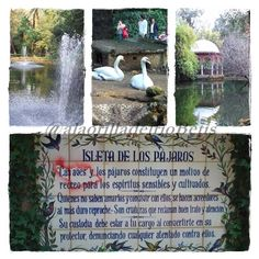 alaorilladelrioBetis parque de Maria Luisa Isleta de los pajaros