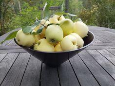 Prinsessojen kotitalous: Herkullinen gluteeniton omenapiirakka ja sen muunnelmat