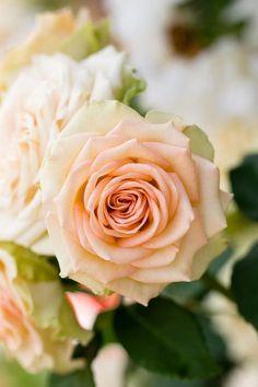 #blush #flower