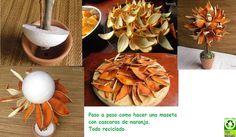 planta con cascaras de naranja