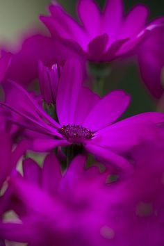 Amuleto - Cores: Violeta