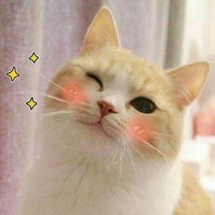 This cute and mysterious little animal of cat has always been one of human favorite pets. cats are small in size and are indoor animals,… Cute Cat Memes, Cute Love Memes, Funny Cats, Cute Kittens, Cats And Kittens, Cute Baby Animals, Funny Animals, Cat Aesthetic, Kawaii Cat