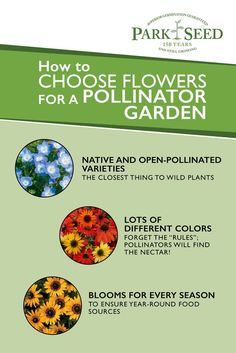 Bring pollinating bees, butterflies and birds into your garden by growing the plants they love to feast upon. Find a wide selection of pollinator seeds at Park Seed! Veg Garden, Garden Shrubs, Garden Seeds, Garden Plants, Gardening For Beginners, Gardening Tips, Organic Gardening, Beneficial Insects, Diy Garden Projects