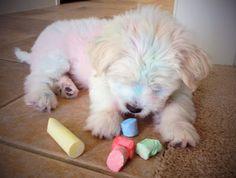CHalked puppy