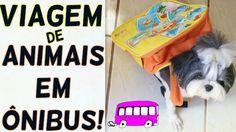 Direitos, Deveres e Dicas Sobre o Transporte Rodoviário (Viagem de Ônibus) de Cachorros, Gatos e Animais - Blog Lói Cúrcio
