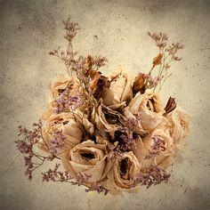 Melancholic Beauty. Dry Flowers.