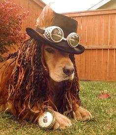 Dog Halloween Costume Contest: Koda