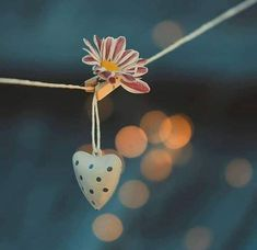 Discovered by princess. Find images and videos on We Heart It - the app to get lost in what you love. My Heart Is Yours, I Love Heart, Object Photography, Macro Photography, Cute Images For Dp, Magical Images, Heart Art, Background Images, Wallpaper Backgrounds