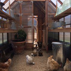 Patina Farm: Chicken Coop