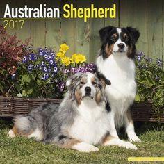Avonside Hunde-Kalender 2017Avonside Hunde Wandkalender 2017: Australian Shepherd