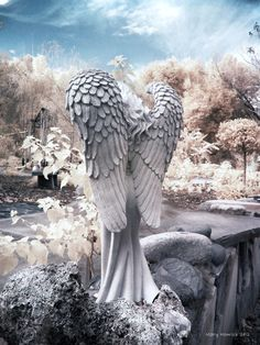 Cemeteries- Angel in Gainesville, Florida Art Print Cemetery Angels, Cemetery Statues, Cemetery Headstones, Old Cemeteries, Cemetery Art, Angel Statues, Graveyards, Angels Among Us, Angels And Demons