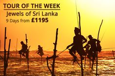 Dambulla, Sigiriya, Kandy and Galle, Yala, elephants, temples & more! With so much crammed into 9 days, our Jewels of Sri Lanka Tour is our TOUR OF THE WEEK!!!!!
