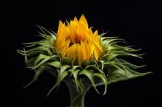 Sunny flower by Ed Coenen on 500px