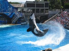 Theme Parks and Fun: Just a hop, skip and a splash away inSeaWorld® San Diego, near San Diego Attractions, Online Tickets, Sea World, Roller Coaster, Places Ive Been, Trip Advisor, Parks, To Go, How To Memorize Things