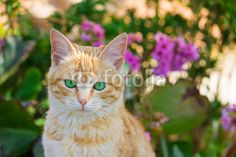 Red baby cat with green eyes on the flowers. #Cat #Pets #Animals #GreenEyes #Flowers #Spring #Garden #Nature #Sweet #Kitten #Kitty #AnimalsAndPets