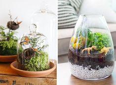Crea paso a paso un terrario de plantas interiores