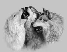 What Dreams Become ~Twilight Stars Trio by Alfa Renard Living Treasures, Twilight Stars, Wolf Eyes, Wolf Artwork, Wolf Spirit Animal, Wolf Pictures, Photo Sketch, Snow Dogs, Sketch Design