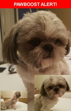 Is this your lost pet? Found in Los Angeles, CA 90065. Please spread the word so we can find the owner!    Nearest Address: North Figueroa Street, Los Angeles, CA 90065, United States
