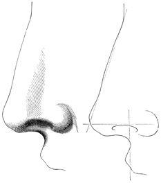Dibujar nariz 3 más sombra