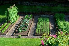 Nice, organized raised bed layout with gravel walkways - stone walk way in between beds may be nice too.