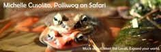Polliwog on Safari: Wood frogs mating
