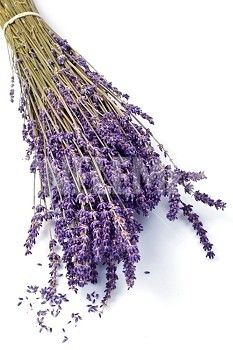 Image Details: Isignstock Contributors Stock photo of lavender flowers isolated on white background. 5 Image, Lavender Flowers, Stock Photos, Detail, Hair Styles, Supreme, Sign, Beauty, Hair Plait Styles