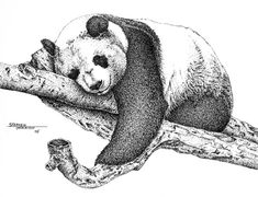 Panda on a limb fine art print, Pen and Ink Drawing.  Comic Genius