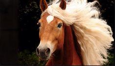 Älskar hästar ❤️